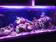 Meerwasser Aquarium 120cm 250l Komplett