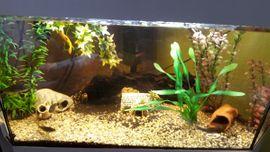 Eck Aquarium 190 Liter LED: Kleinanzeigen aus Merkelbach - Rubrik Fische, Aquaristik