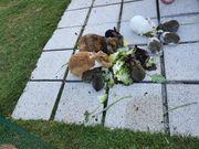 Kanninchen Hasen