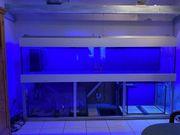 Meerwasseraquarium 300x65x60 mit Unterbau Alu