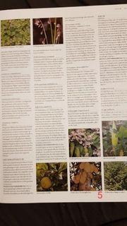 ABC der Pflanzen