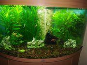 Aquarium mit allem