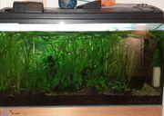 Aquarium 100 L mit Außenfilter