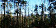 Wildniswandern Pfälzer Wald