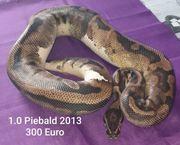 1 0 Piebald 2013