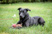 Liebenswerter junger Hundebub sucht neue
