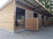 Aussenboxen Aussenboxenställe Pferdeställe Pferdeboxen Weidehütte