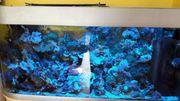 Raumteiler Aquarium 525Liter 150x50x70cm Inkl