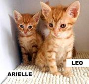 Arielle Leo suchen ein Zuhause