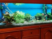 Aquarien und Zubehör und Fische