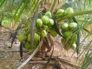 Brasilien paradiesisch schönes 300 Ha