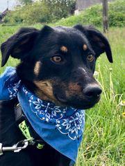 Leroy - hübscher Junghund sucht Anschluß