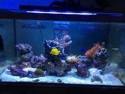 300l Meerwasseraquarium