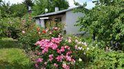 Gartengrundstück mit Massivwohnhaus