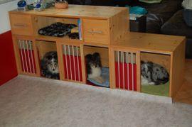 Hundebox als Raumteiler