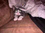 katzendame sucht ein Zuhause mit