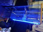 Vitrine Glas Blau Beleuchtet