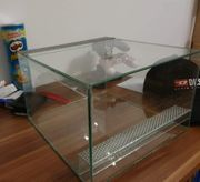 Glass Terrarium mit skorpion