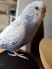 Mein Vogel wird vermisst