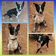 Hund Rüde Zorro 2 Jahre