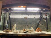 Juwel Komplett Aquarium 160 lt