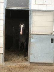 Betreutes wohnen für Ihr Pferd