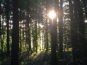 Wald rd 2 5 ha