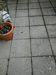 Terrassenplatten zu verkaufen ab sofort