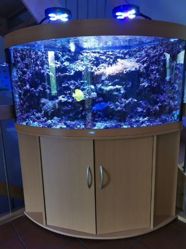 Trigon 350 Meerwasser Aquarium komplett