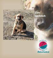 Zoe - Die Foto-Macherei finde ich