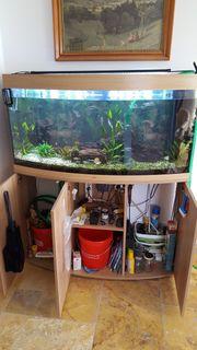 Aquarium Juwel 260 l komplett