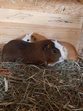 BOB sucht ein Zuhause: Kleinanzeigen aus Gundelsheim - Rubrik Kleintiere