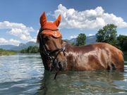 Pony Wallach sucht neues Zuhause