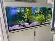 Eheim Incpiria Aquarium 400 komplett