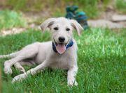 Ronny neugieriger Hundebub ca 3