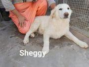 Sheggy- einer von drei Buben