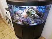 Meerwasser Aquarium Eck aquarium Fluval