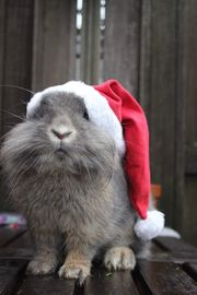 Mobile Tierbetreuung für Kaninchen Meerschweinchen