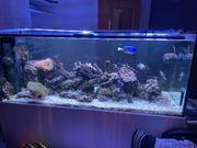 Salzwasser Meerwasser Aquarium Auflösung