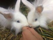 Mini kaninchen babys kinderlieb zwergkaninchen