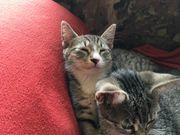Kitten sucht liebevolles Zuhause