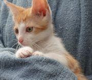 Süße Babykätzchen Kitten Katzenbabies Kater