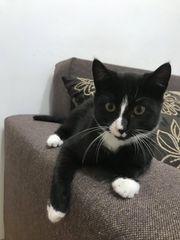 Katzenjunge Fridolin sucht sein Glück