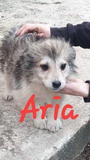 Aria sucht ein liebevolles Zuhause