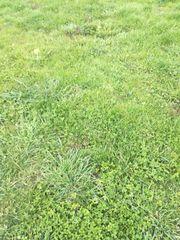 Rasenmähen und Gartenhilfe