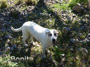 Herdenschutzhund Bonita hofft auf ein