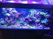 Meerwasser - Top Riffaquarium - ca 800