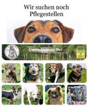Liebe Pflegefamilien für Hunde der