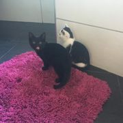2 süße Kätzchen abzugeben