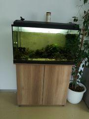 126l Aquarium mit komplettem Zubehör